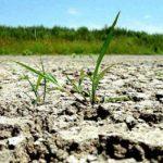 Studiu EIU: Planeta este la un pas de o criză alimentară fără precedent