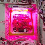 Premieră. Legume crescute în spațiu, în meniul astronauților de pe ISS