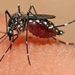 Virusul Zika: În Marea Britanie va fi pulverizat insecticid în avioanele venite din regiunile afectate