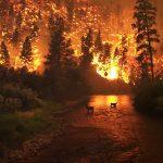 """Modificările climatice amenință de două ori mai mult siturile naturale din patrimoniul mondial, comparativ cu 2014. Uniunea Internațională pentru Conservarea Naturii cere comunității internaționale """"acțiuni urgente"""""""